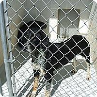 Adopt A Pet :: Richie - Dundas, VA