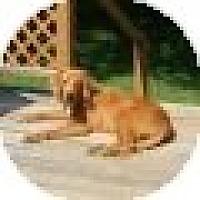 Adopt A Pet :: Sampson - Denver, CO