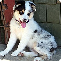 Adopt A Pet :: Remington.. - Post Falls, ID