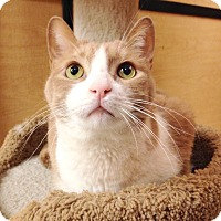 Adopt A Pet :: Gibson - Foothill Ranch, CA