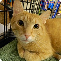 Adopt A Pet :: Oscar - The Colony, TX