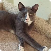 Adopt A Pet :: Mr. Bibbins - Cocoa, FL
