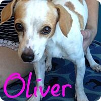 Adopt A Pet :: Oliver - Scottsdale, AZ