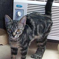 Adopt A Pet :: CADEN - Morriston, FL