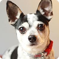 Adopt A Pet :: Drake - Romeoville, IL