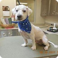 Adopt A Pet :: Hugger - Wildomar, CA