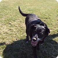 Adopt A Pet :: Ruby - Mechanicsburg, OH