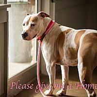 Adopt A Pet :: Winter - Marietta, GA