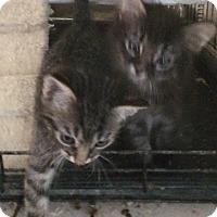 Adopt A Pet :: Dalton - Cocoa, FL