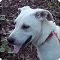 Adopt A Pet :: Ocoee - Plainfield, CT