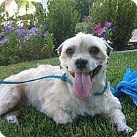 Adopt A Pet :: Alberta - Irvine, CA