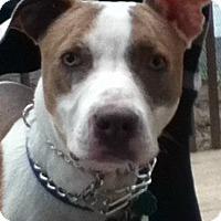 Adopt A Pet :: FRANKIE - Ridgewood, NJ