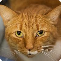 Adopt A Pet :: Oshi - Circleville, OH