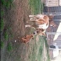 Adopt A Pet :: Casey - Visalia, CA