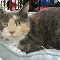 Adopt A Pet :: Carly - Bear, DE