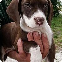 Adopt A Pet :: Target - Gainesville, FL