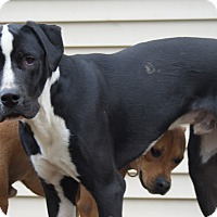 Adopt A Pet :: Walter - Baden, PA