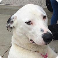 Adopt A Pet :: Annie - Rockville, MD