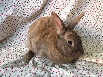 Cinnamon Mix for adoption in Goleta, California - SAFFRON