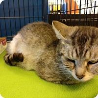 Adopt A Pet :: Daisy - Avon, OH