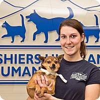 Adopt A Pet :: Timmy - Cashiers, NC