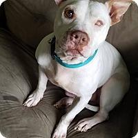 Adopt A Pet :: Seamus - Dayton, OH