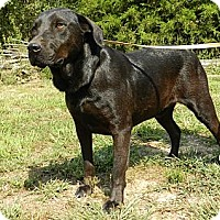 Adopt A Pet :: Ebony - Centerville, TN