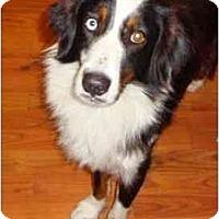 Adopt A Pet :: Rain - Orlando, FL