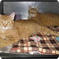 Adopt A Pet :: Rocky Road & Cap'n Chunk - Clementon, NJ