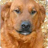 Adopt A Pet :: CASSIDY - Wakefield, RI