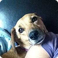 Adopt A Pet :: Cleo - Adoption Pending - Vancouver, BC