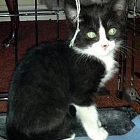 Adopt A Pet :: Easy - Burbank, CA