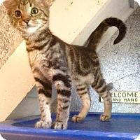 Adopt A Pet :: Nash - McDonough, GA