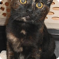 Adopt A Pet :: Zombie - Chattanooga, TN
