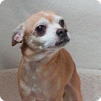 Adopt A Pet :: Spike (D16-201) - Lebanon, TN