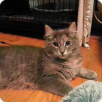 Adopt A Pet :: Glameow - Milwaukee, WI