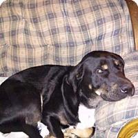 Adopt A Pet :: Tucker - St. Charles, MO