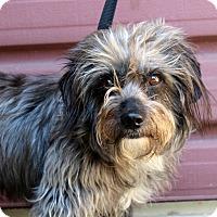 Adopt A Pet :: Bruno Mars - Los Angeles, CA