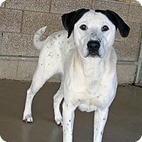 Adopt A Pet :: Daisy - Ruidoso, NM
