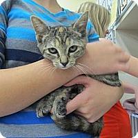 Adopt A Pet :: Suzuki - Riverhead, NY