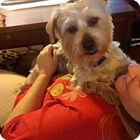 Adopt A Pet :: Franky - Lorain, OH