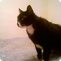 Adopt A Pet :: Mister Mister - Warren, MI