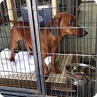 Adopt A Pet :: RAIDER - Lubbock, TX