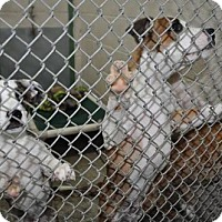 Adopt A Pet :: Edgar - Erwin, TN