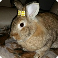 Adopt A Pet :: Tracey - Williston, FL
