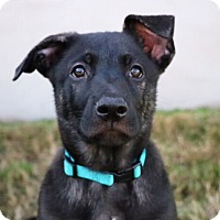 Adopt A Pet :: Carter Beauford - Austin, TX