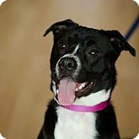 Adopt A Pet :: Maggie - Milwaukee, WI