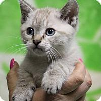 Adopt A Pet :: Spitfire (Has Application) - Washington, DC