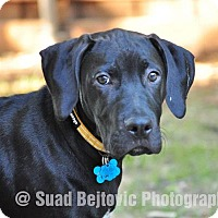 Adopt A Pet :: Dallas - McKinney, TX