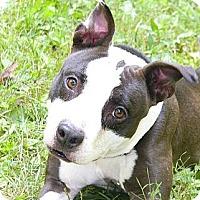 Adopt A Pet :: Peggy - Mocksville, NC